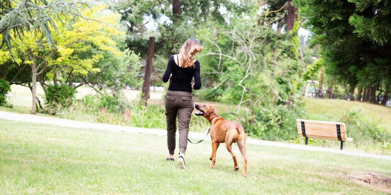 Colleen Hild training Rhodesian Ridgeback - Colleen Dog Training